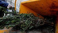 Утилизация новогодних елок во Владивостоке