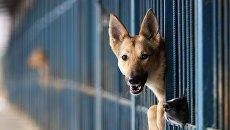 Собаки в вольере приюта для бездомных собак Красная сосна в Москве. Архивное фото