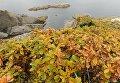 Растения на острове Кунашир