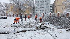 Сотрудники коммунальных служб во время уборки дерева упавшего на автомобильную дорогу в следствии снегопада в Москве. 4 февраля 2018
