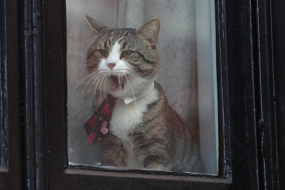 Кот по кличке Джеймс, живущий в посольстве Эквадора в Лондоне