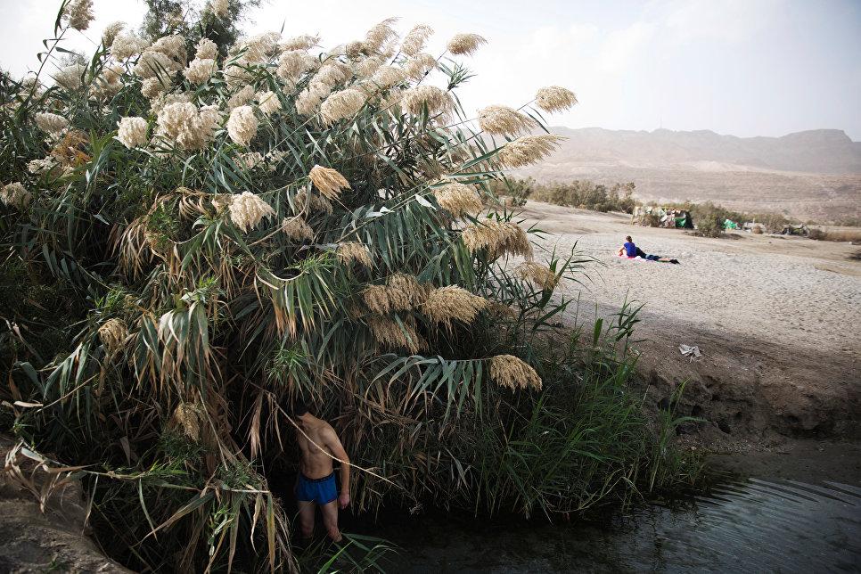 Мужчина в тростниковых зарослях на берегу Мертвого моря