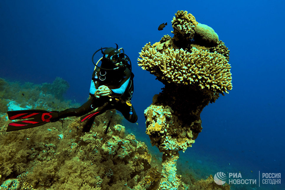 Аквалангист в Красном море на территории Национального парка Рас-Мохаммед в Египте