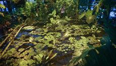 В Ботаническом саду МГУ Аптекарский огород. Архивное фото