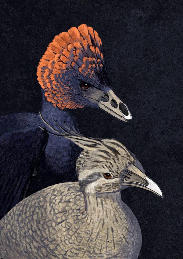1518110865 Маленькие, беззубые, мозговитые. Почему птицы пережили динозавров