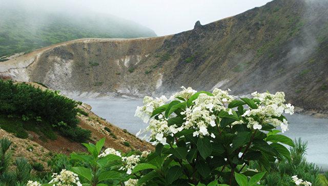 Цветы возле вулкана Головнина на острове Кунашир Большой Курильской гряды