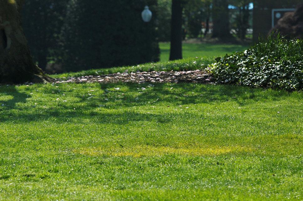 REUTERS  Yuri Gripas Желтая трава на месте где должен находиться дуб который посадили Дональд Трамп и Эммануэль Макрон