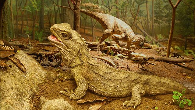 Дожили! Пять древнейших существ планеты