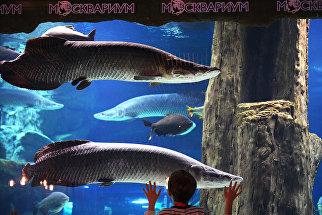 Посетитель в Центре океанографии и морской биологии Москвариум. 19 мая 2018