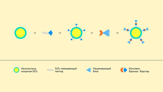 Схема конструктора наночастиц для борьбы с раком
