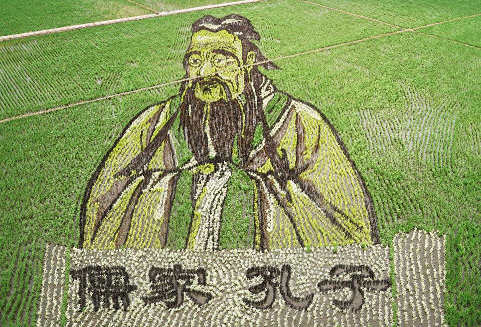 Изображение Конфуция, сделанное в поле с использованием различных сортов риса