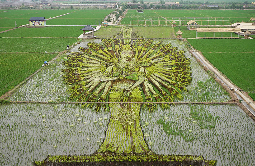Рисовое поле в виде статуи Бодхисаттвы