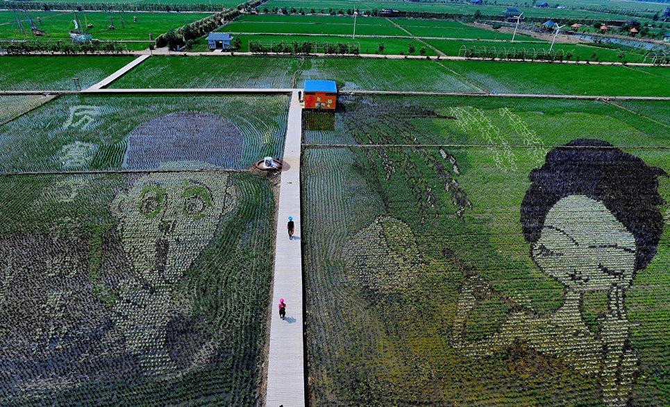 Изображения в рисовом поле