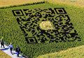 QR-код, сделанный в поле с использованием различных сортов риса