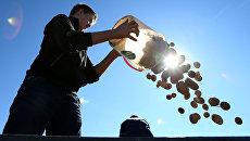 Молодой человек во время уборки урожая картофеля. Архивное фото