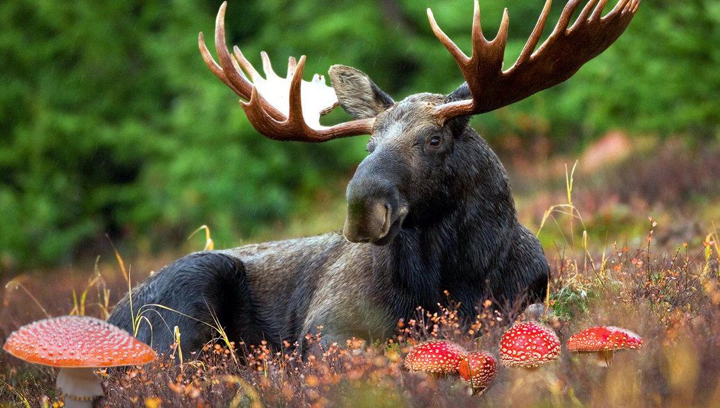 """Лесной тоник: на чем """"сидят"""" дикие животные"""