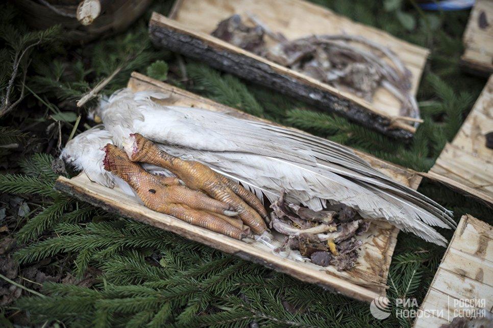 Жертвоприношения Богу Ош Кугу Поро Юмо  на празднике Сярем.