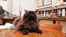 Кот Бегемот. Архивное фото