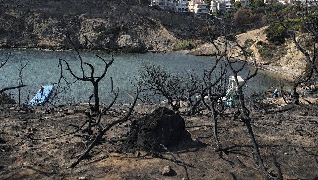 После лесных пожаров в Греции. Архивное фото