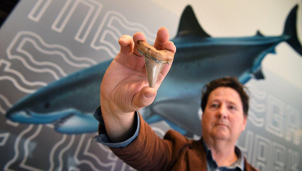 Филипп Маллали демонстрирует найденный им зуб доисторической мега-акулы