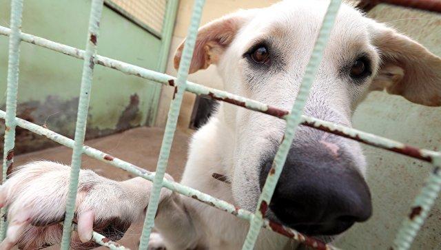 Спасенных из сгоревшего в Москве приюта для животных переместили