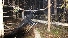 Место крушения вертолета в Костромской области