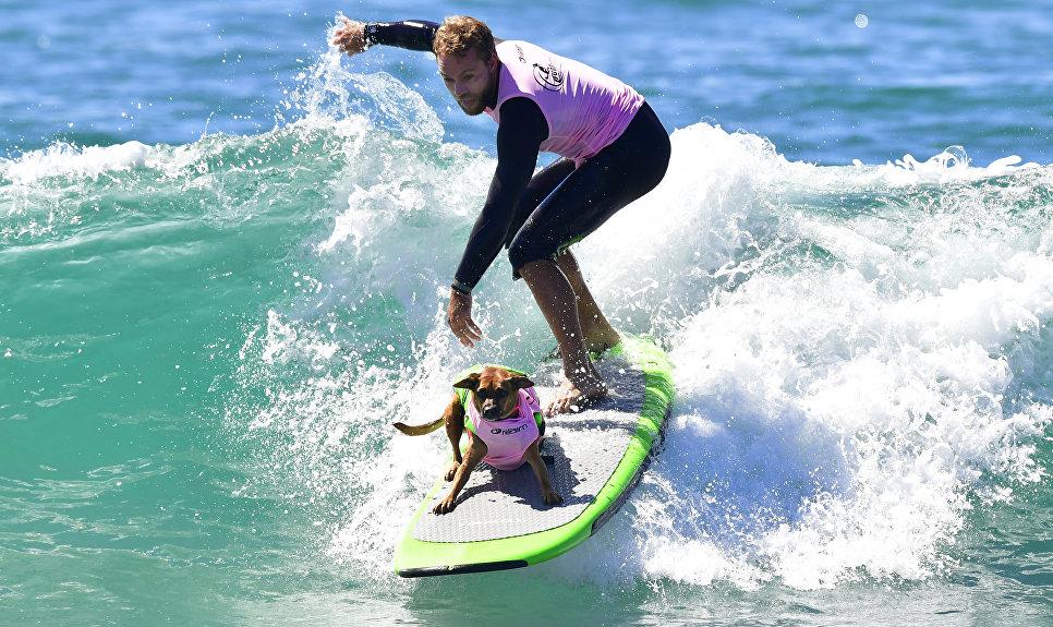 Участники ежегодного конкурса собак-серфингистов Surf City Surf Dog в Калифорнии
