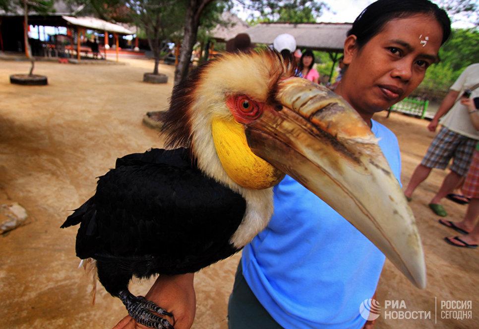 Туристам показывают экзотических птиц на пляже Нуса Дуа.