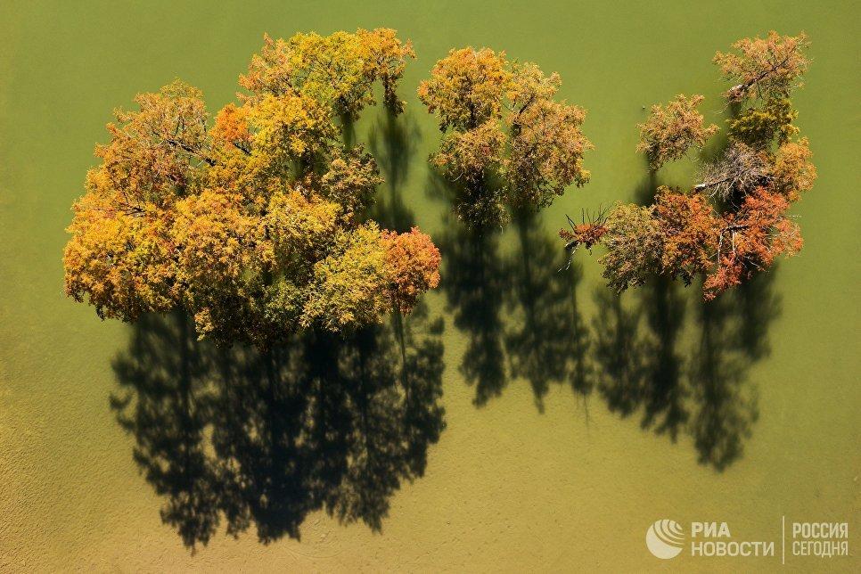 Болотные кипарисы на озере Сукко (Кипарисовое озеро) в Краснодарском крае