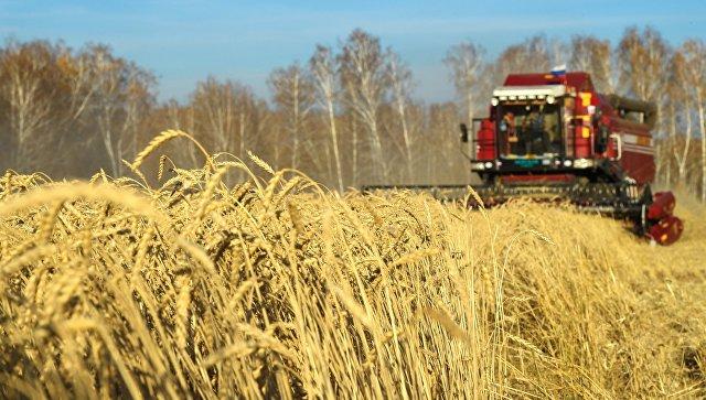 В Минсельхозе спрогнозировали объем экспорта пшеницы