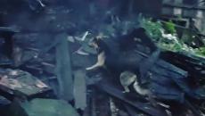 Собака на тушения заброшенного здания в Ленинском районе Нижнего Новгорода