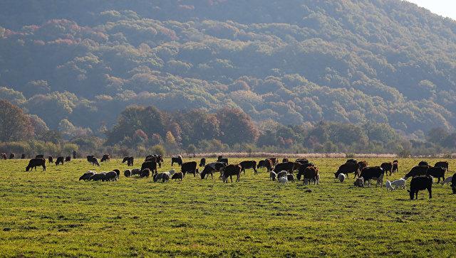 Объем сельхозпроизводства в 2018 году может сократиться, заявил Орешкин