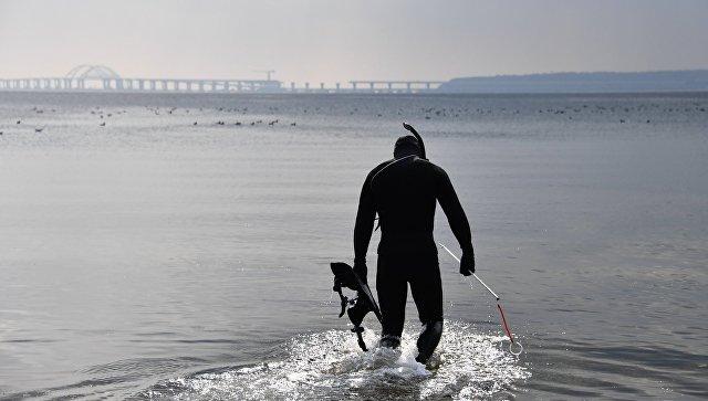 Строительство Крымского моста не повлияло на экологию, заявили ученые