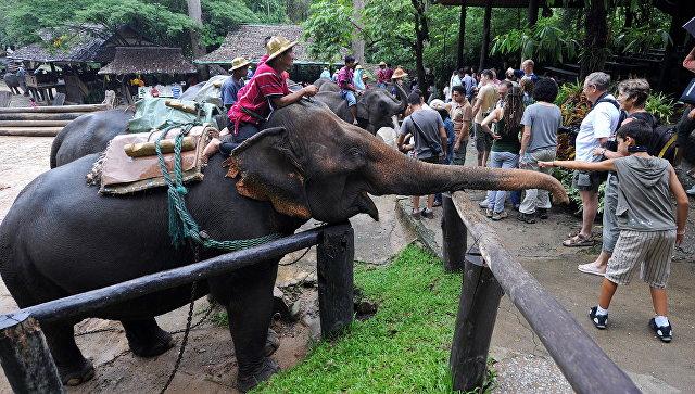 Туристы в слоновой деревне в Таиланде. Архивное фото