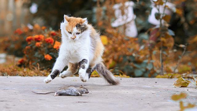 Кошки — как люди. Среди домашних питомцев нашли невротиков