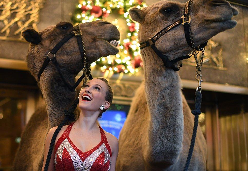 Участница рождественского мюзикла Radio City Christmas Spectacular позирует с верблюдами