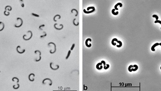 """Биологи из МГУ нашли на Алтае новый вид """"марсианских"""" микробов"""