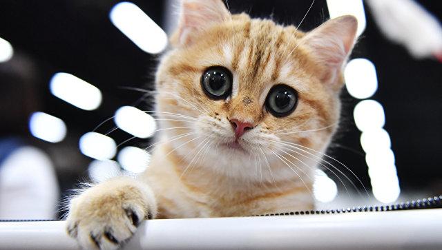 В Китае скоро может появиться на свет клонированный котенок