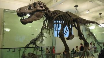Скелет тираннозавра в Американском музее естествознания