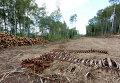 Строительство автодороги через Химкинский лес приостановлено