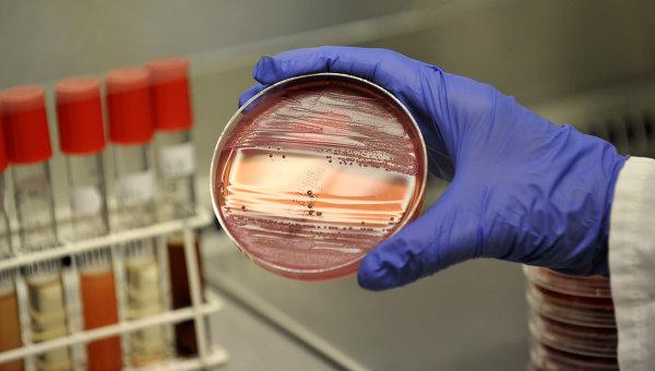 Сотрудник микробиологической лаборатории в Гамбурге демонстрирует материал с бактериями Escherichia coli (EHEC)