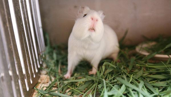 Ученые узнали, как крысы научились предугадать погоду
