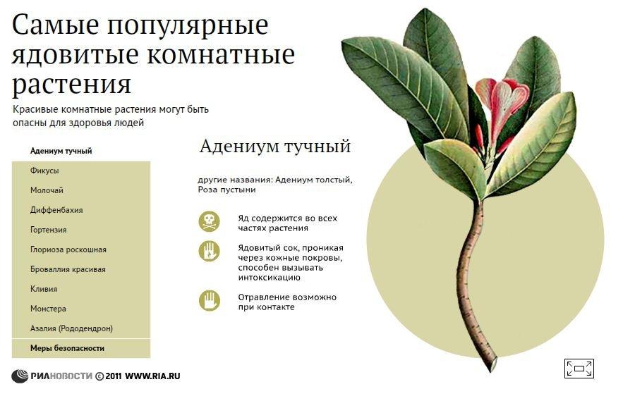 ядовитые растения список с
