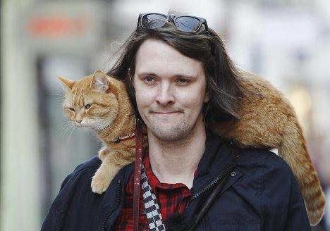 Уличный кот боб краткое содержание