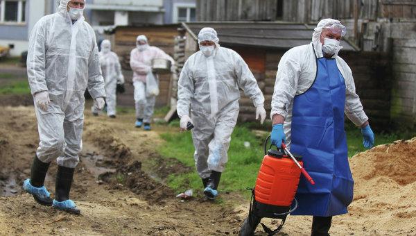 Вобласти из-за АЧС уничтожили практически 2,5 тысячи свиней