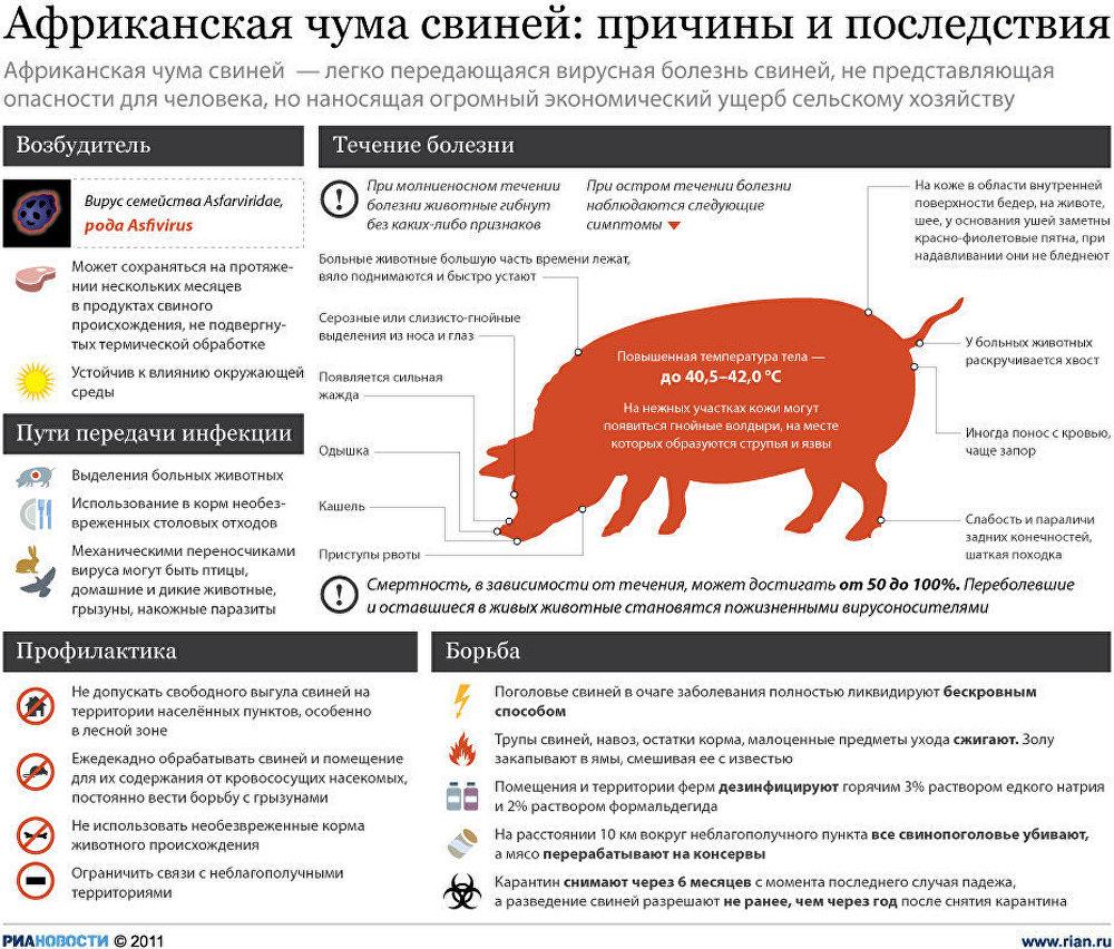 африканская чума свиней инструкция - фото 2
