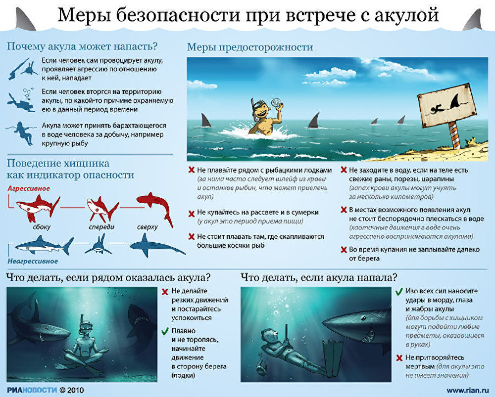 Меры безопасности при встрече с акулой