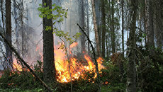 Лесные пожары. Архив