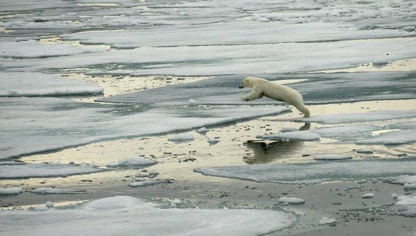 Национальный парк Русская Арктика. Архив