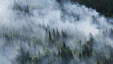 Лесной пожар в Сибири. Архивное фото